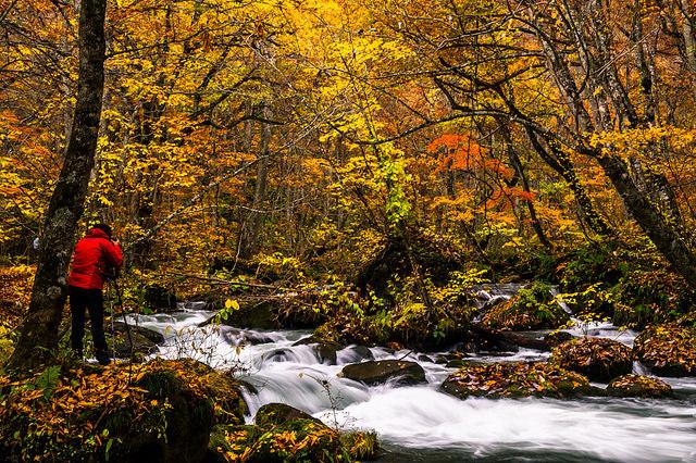 錦繍の奥入瀬渓流で、紅葉色に染まる秋