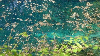 まるでジブリのような幻想的な世界。白神山地の十二湖を目指して