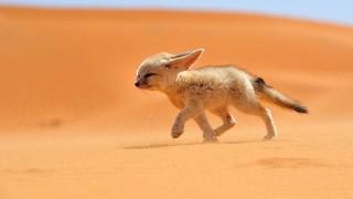 見るだけで癒される!世界で最も可愛い動物7選