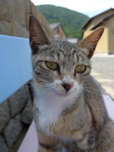 小林希の世界ネコ旅〜瀬戸内海の佐栁島編