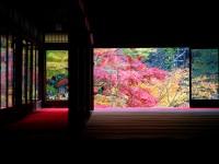 【ライトアップの紅葉】ドラマが始まるロマンティック京都