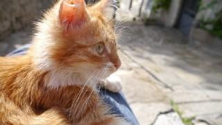 【ブルガリア】猫がいっぱいで癒される!古都ヴェリコタルノヴォを散策