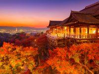【京都】大切な人と見たい、ロマンティックな「紅葉のライトアップ」