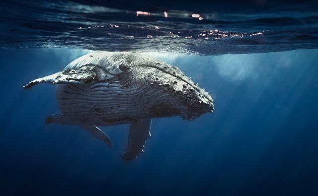 深さ2,197mの洞窟に体長34mのクジラ!ちょっと意外な世界No.1特集