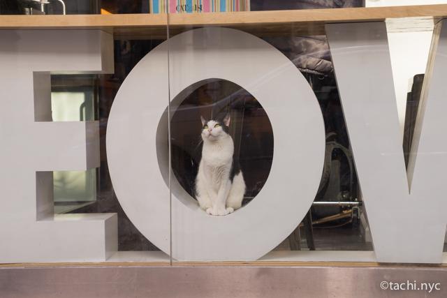 NY初の猫カフェも猫と遊べるUberも、気に入ったらそのままうちの子に。