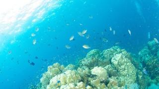 【タイ】タオ島のホワイトロックでダイビングをしたらこんな絶景が待っていた
