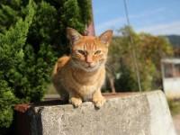 【香川】猫好きにはたまらない!のどかで癒される「唐櫃港」をお散歩
