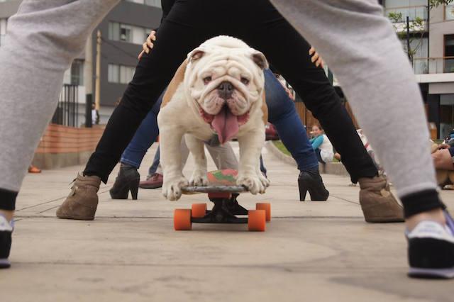 【ギネス記録人間トンネル】笑って走り抜けたスケートボード・ドッグ