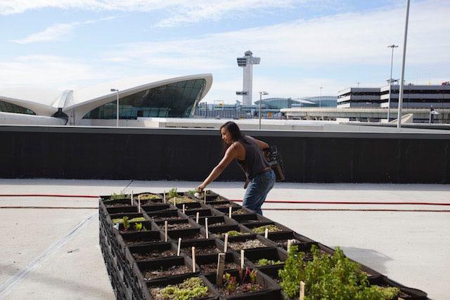 NYの空港に広がる夢 エアラインの屋上農園