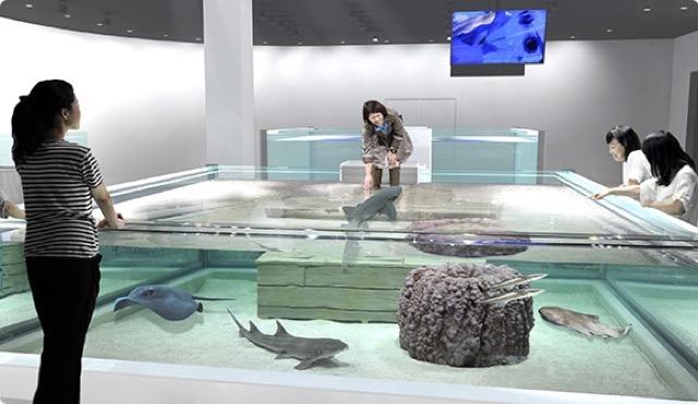 デートで行きたい!水の中に浮かんでいるような体感型ロマンチック水族館