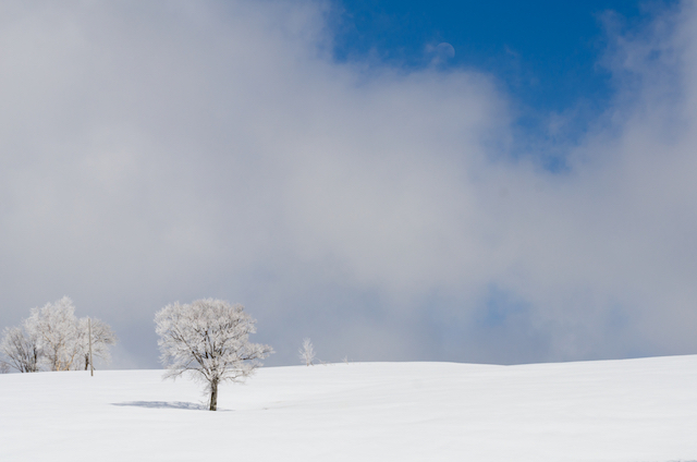 【日本の雪景色】心が真っ白になる旅がしたい