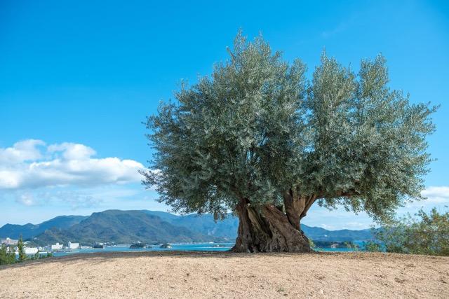 【パワースポット】瀬戸内海に浮かぶ、美しく豊かな小豆島の魅力