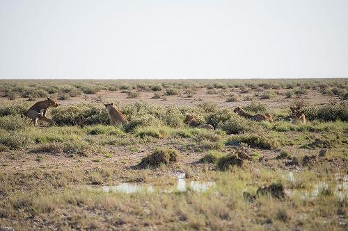 野生動物に感動!アフリカ最大級の動物保護区「エトーシャ国立公園」