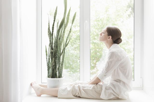 睡眠で健康に!質の高い眠りをサポートしてくれる8つの植物