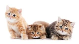 いつも一緒にいたいから!可愛くて意外な猫ちゃんグッズたち