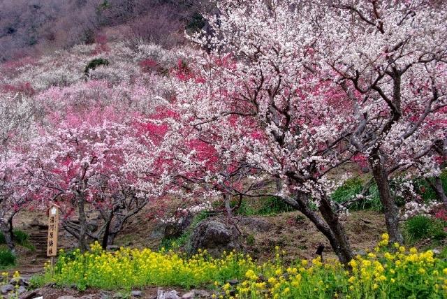 満開の梅の花園と絶品オーベルジュで春を先取り一人旅!