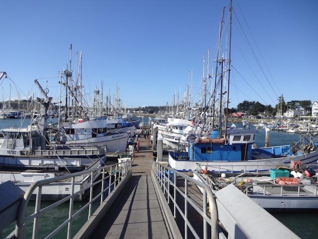 値段は日本の4分の1! 漁師から激安で購入するアラスカ産いくらに感動