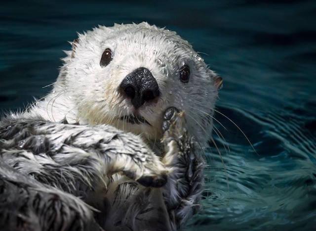 【女性限定!】魚たちと一緒に海の底で眠ってみない?水族館でお泊り会イベント