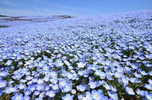美しすぎる見渡す限り花々が咲き乱れている日本の絶景5つ