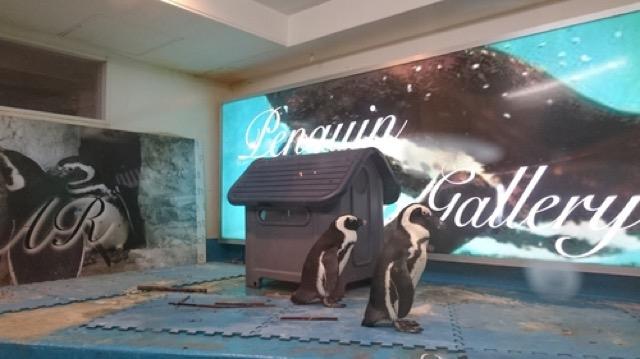 ペンギンに癒されながら非日常体験。池袋「ペンギンのいるBAR」