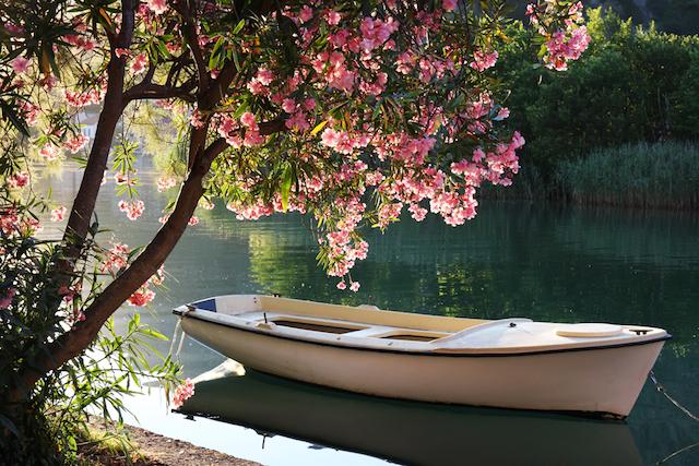心が柔らかくほどけてゆく、世界の春の絶景