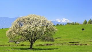 田舎に住む贅沢もあり!国内移住ランキングTOP5