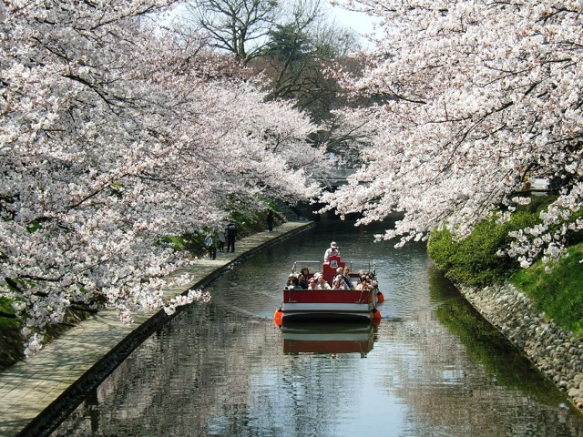 息を飲むほど美しい!北陸の桜の名所5選
