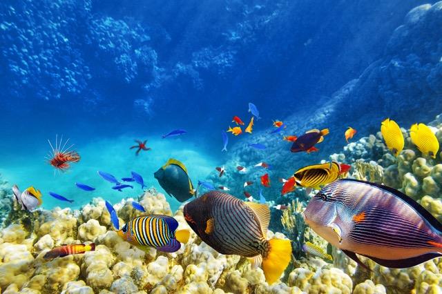 フランスのエイプリルフールは「魚の日」!?