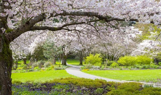 お花見好きなのは、日本人だけじゃない!世界の桜の名所3選
