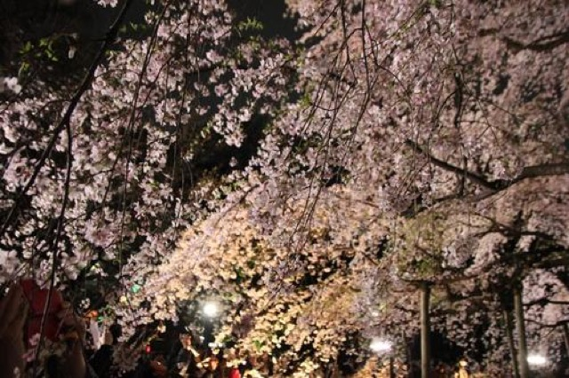 六義園のライトアップ。大きくて美しい「しだれ桜」に魅了された春の始まり