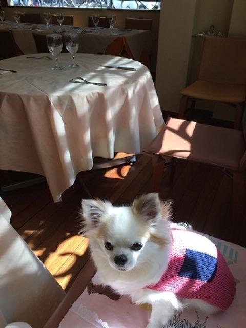 【銀座】リピート決定!犬と行けるフレンチ「ル・シャボテ」
