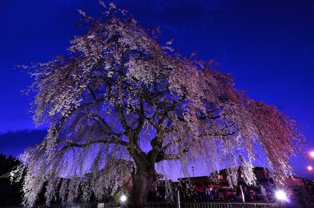 今日の絶景ヒトコト【2】桜前線北上中