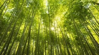 今日の絶景ヒトコト【12】竹林の秘密