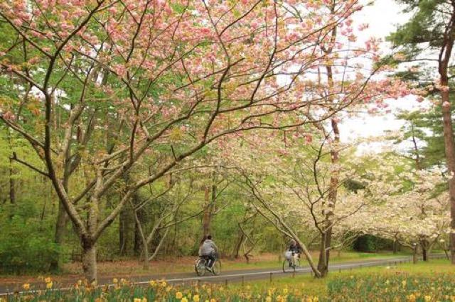 【茨城】チューリップとスイセンで感じる春。「ひたち海浜公園」に癒されて