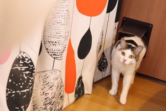 猫を飼いたくても飼えない女性必見!猫と暮らせる「ねこシェアハウス」誕生!