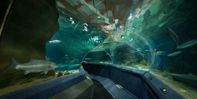 facebook/National Aquarium of New Zealand