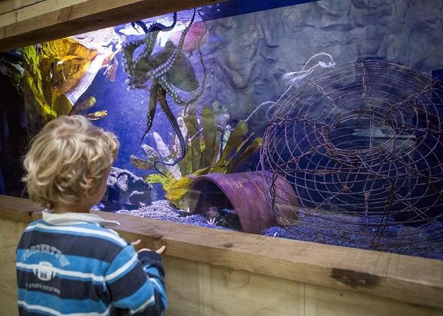 【連載】海外の嘘のような本当の話/ニュージーランドの水族館からタコが大脱走!