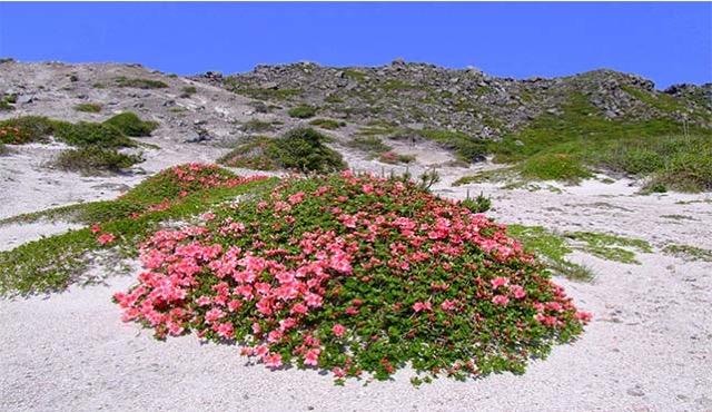 山の上に砂漠が広がる!世にも不思議な神津島の絶景