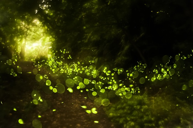 【東京23区5選】初夏の風物詩「ほたる」を眺める宵