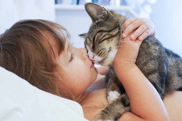 猫好きのあの人にも教えてあげたい。にゃんこスイーツが愛しすぎる