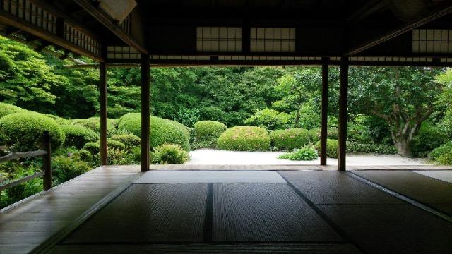 【京都】青もみじが美しすぎる!京都の神社仏閣・5つ