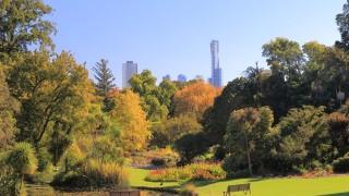 南半球は今が紅葉シーズン!メルボルンの秋は街も郊外も息を飲むほど美しい