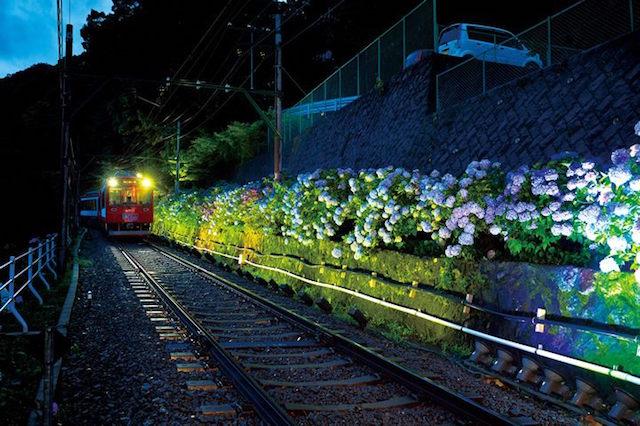 梅雨を楽しむ箱根 あじさい電車に乗る日帰り旅
