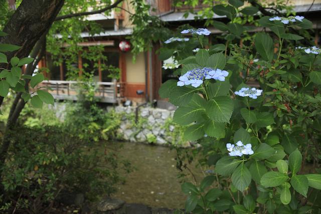 初夏の京都、行ってみたい新緑のカフェめぐり