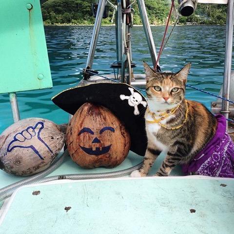 相棒は元野良猫!世界の海を旅するように暮らす女性の生き方
