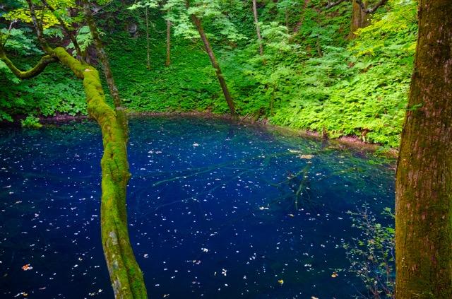日本人なら一度は行きたい、日本にある4つの世界自然遺産