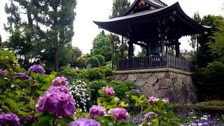 横浜のあじさい寺。四季折々の花を楽しめる「正覚寺」