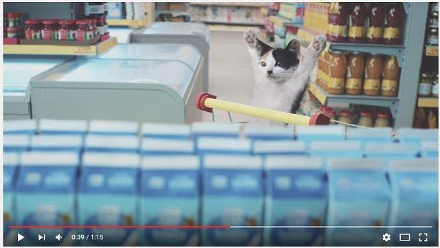 【ドイツ】スーパーマーケットCMで超かわいい猫ちゃんたちが大人気!