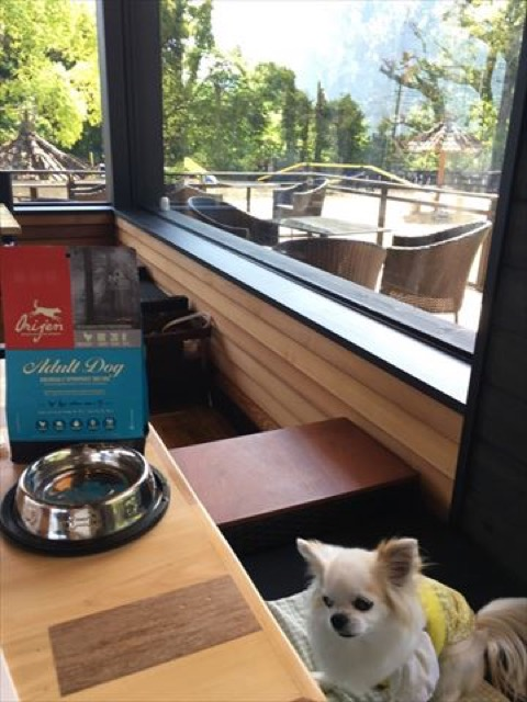 【伊豆高原】2016年3月オープン!愛犬と飼い主のための「愛犬の駅」