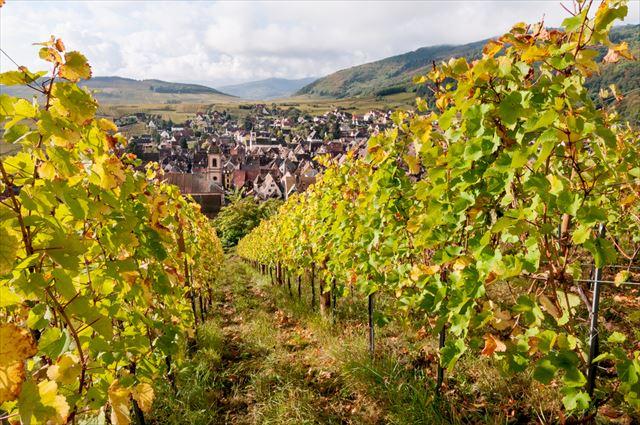 ボルドー、ブルゴーニュだけじゃないフランスのワイン